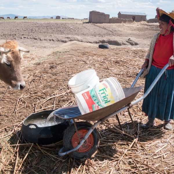 Indigenous woman in the altiplano of Peru gives animals water from wells that could be affected by contamination.