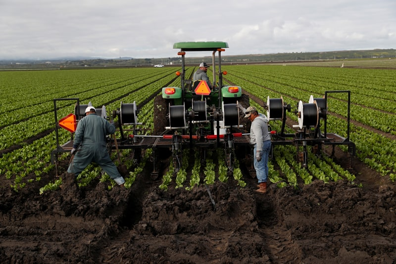 Agricultural workers labor in a Marina, Calif., field March 30, 2020, amid the coronavirus pandemic. Farm labor advocates say farmworkers are essential workers.(CNS photo/Shannon Stapleton, Reuters)